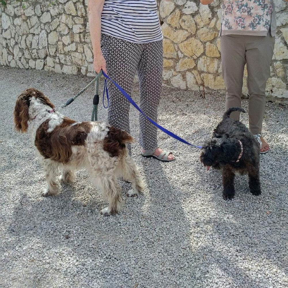 Jenny's lovely dogs
