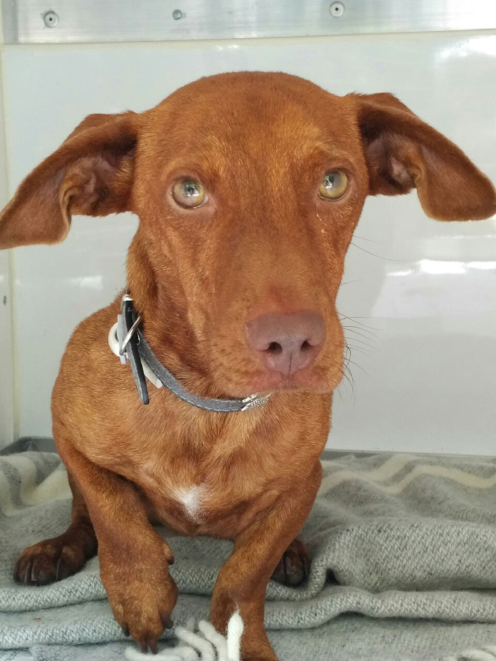 Dobbie is named after the house elf in Harry Potter — the resemblance is uncanny!