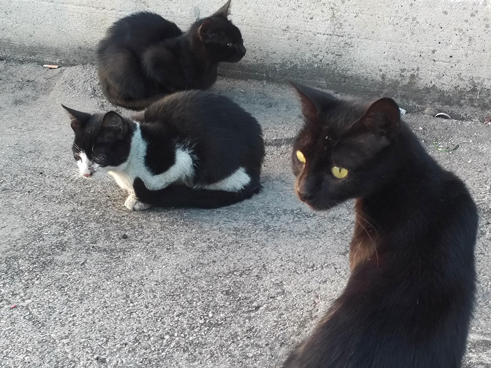 A family of stray cats at the port — you can't help worrying about them all and wondering what fate has in store for them