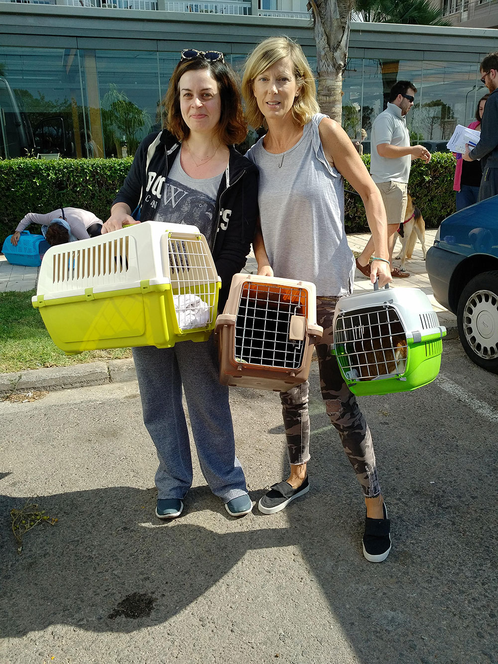 Daphne (with Cordelia from Nine Lives Greece) arriving with her cats