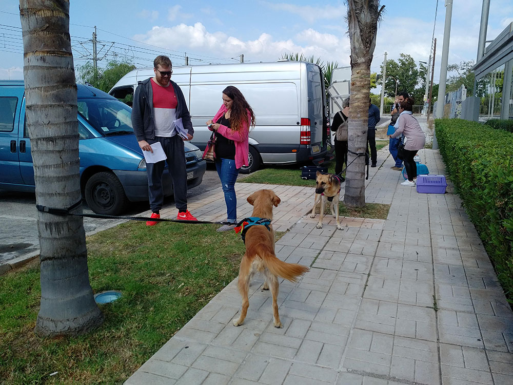 It was a glorious morning in Glyfada (a suburb of Athens), as our uk-bound pets from Greece and their owners started to assemble round our van