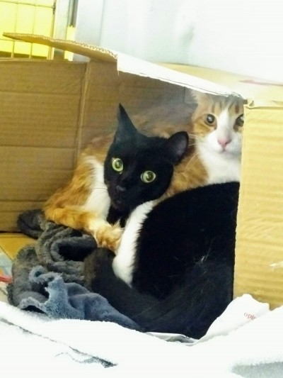 Ginger and Sabrina curled up in one of Cordelia's cardboard housing modules