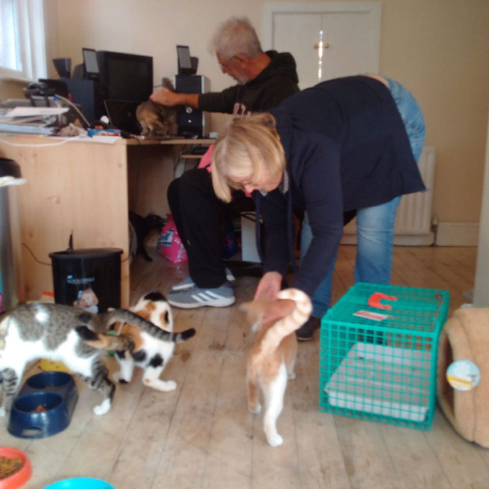 reunions in the UK: Wonderful feline chaos