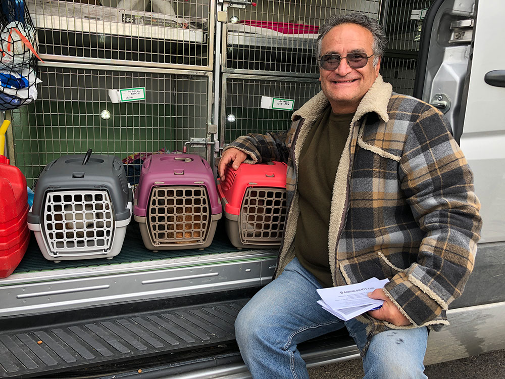 Lyn's family of three cats are on their way with us to the UK