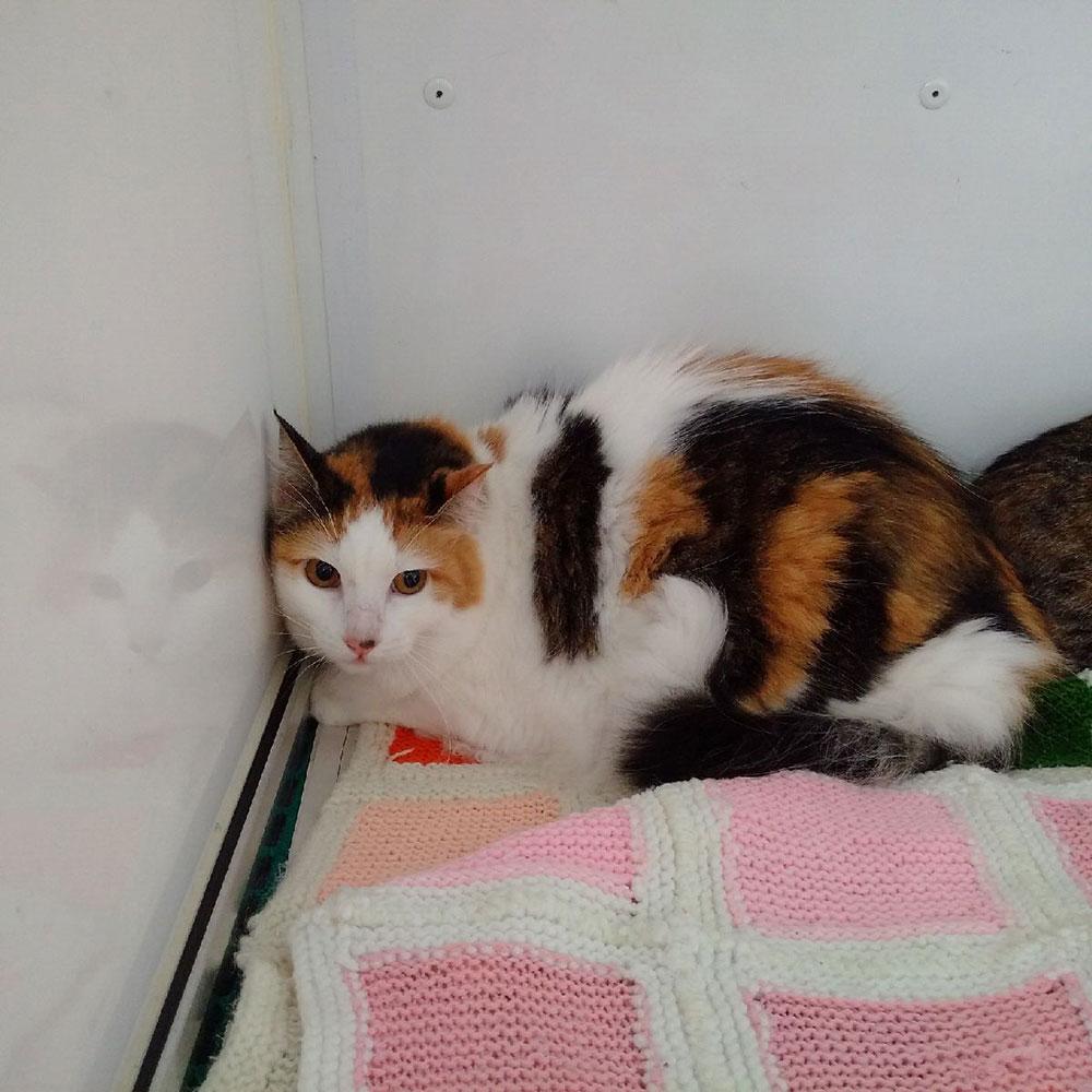 Gorgeous tortoiseshell cat Rosie