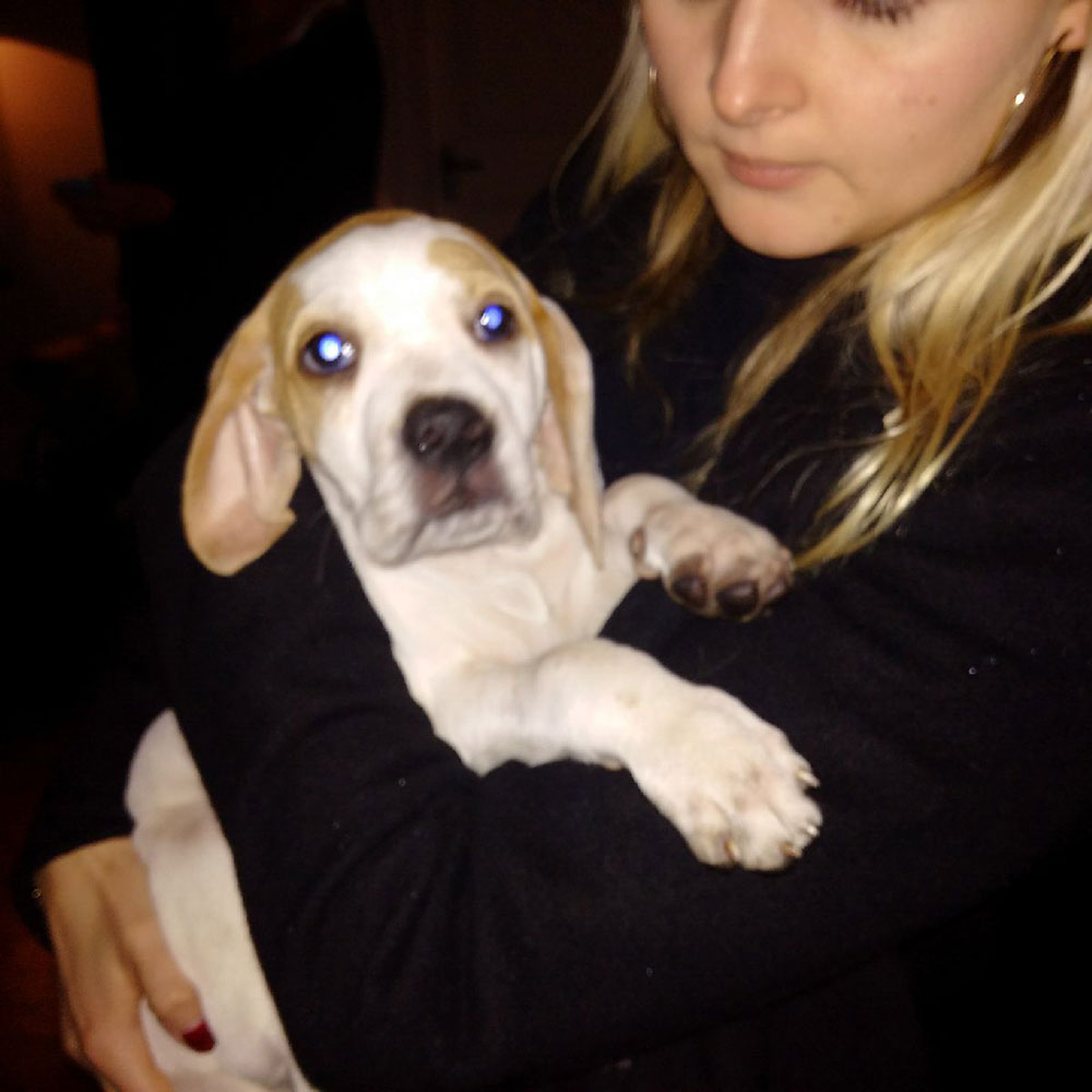 Lovable Zola reaches her delighted new family on an equally inclement night in Surrey