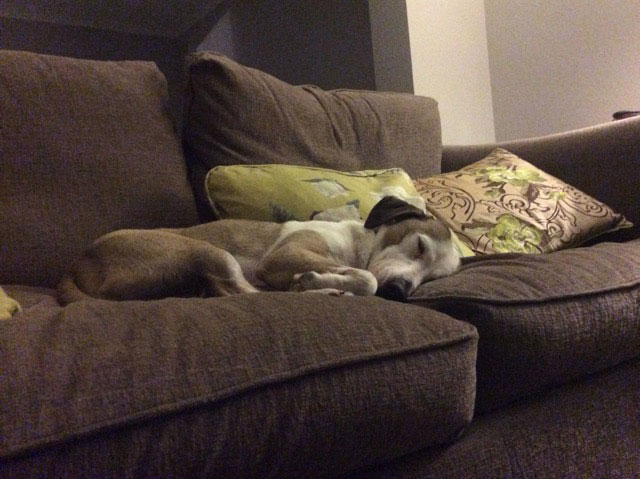 "Gorgeous Robbie from Lesvos at his new forever home in the Wirral. Owner Kate wrote to say: ""Thank you for getting Robbie to me so quickly. After a very busy day exploring the garden, going for walks and out in the car shopping, he is having a well deserved snooze on the sofa!"""
