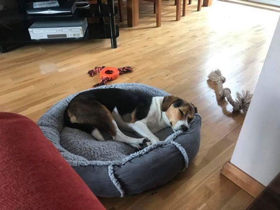 Lara flaked out in a lovely soft bed. We think Sara will truly enjoy this trio, and they are so lucky to have been adopted by her.