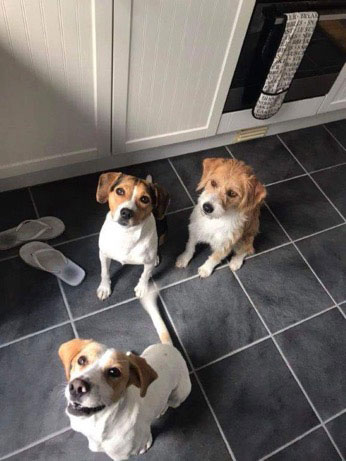 Lara, Arti and Tilsda, also from Lesvos, at their new home with Sara in Loughton. This delightful trio want to do nothing but please and be loved. All three have tested positive for Ehrlichia, a tick-borne blood disease that's fairly common among stray dogs in Greece and Spain. Testing positive doesn't necessarily mean they have Ehrlichia, but it may develop. However, it's perfectly treatable and is no reason not to adopt a dog. These three will be tested again after 25 days of treatment to check whether a further course of treatment is needed.