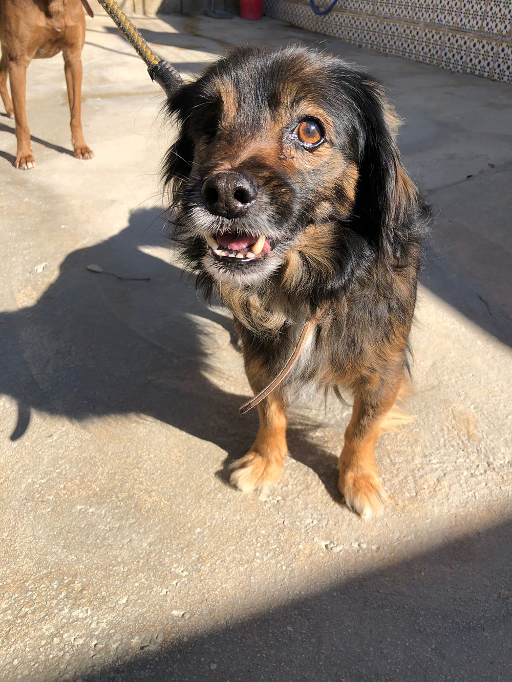 Leo is the smallest of the three, but has the biggest personality. At seven years old, he's missing an eye and part of an ear, and has two bullets lodged in his body. A real force of nature!
