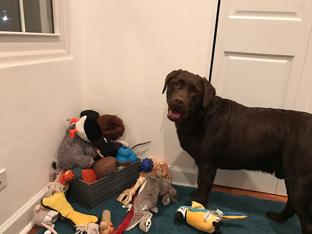 Steve in Bermuda — what a great pile of toys was waiting for this gorgeous fellow!