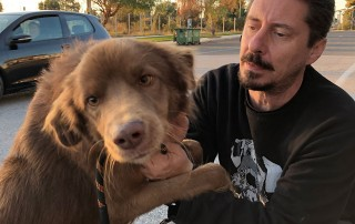Simba with Akis. If you love Setters, this Setter cross is the dog for you. Very loving, keen on humans, and bursting with energy.