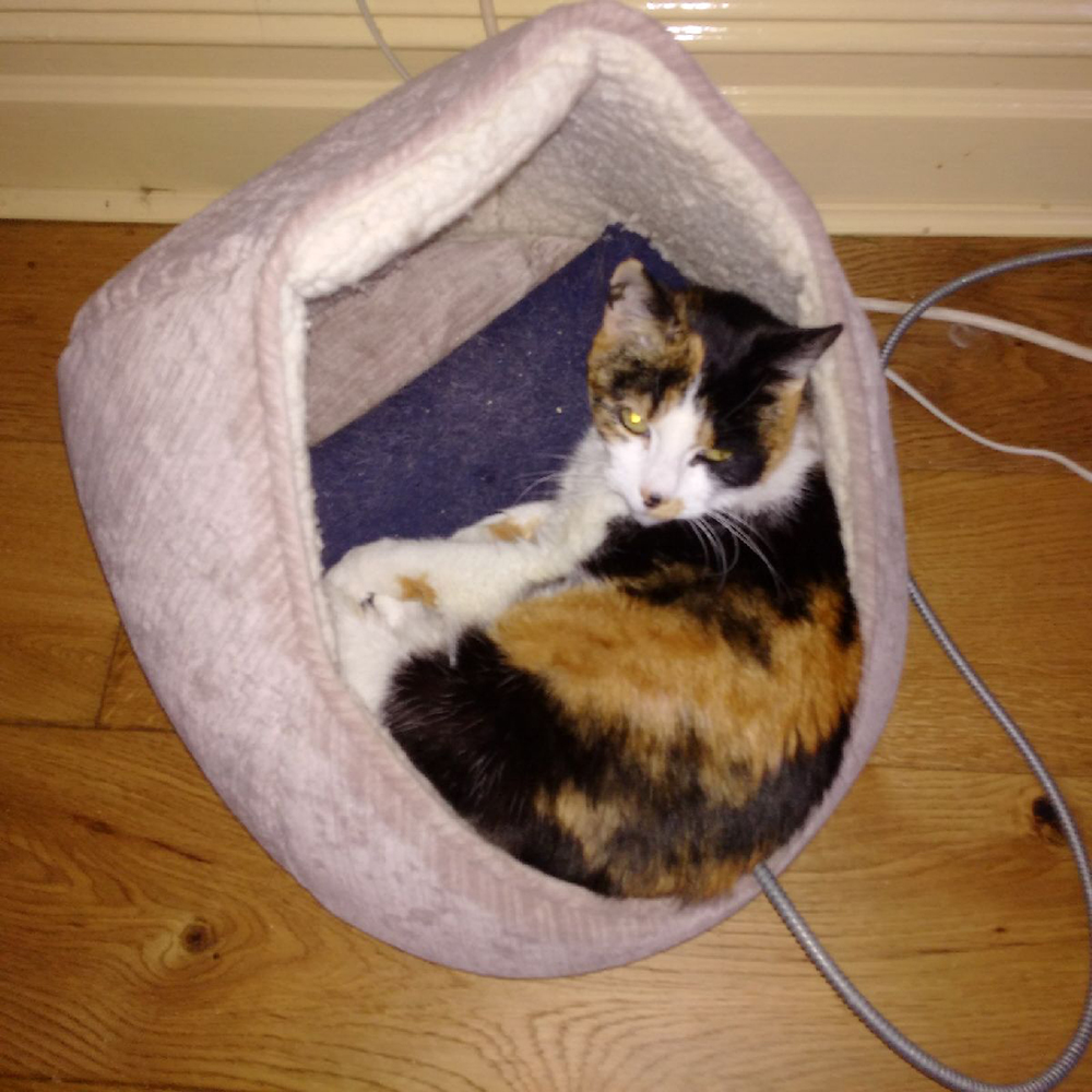 A snuggly bed for Charlie, who loves her home comforts