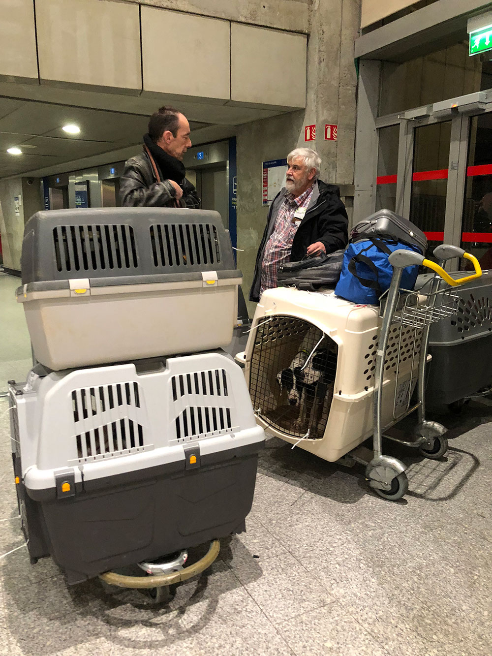 Courier Richard was waiting for us in arrivals, ready to help us get the dogs into the waiting Animalcouriers van