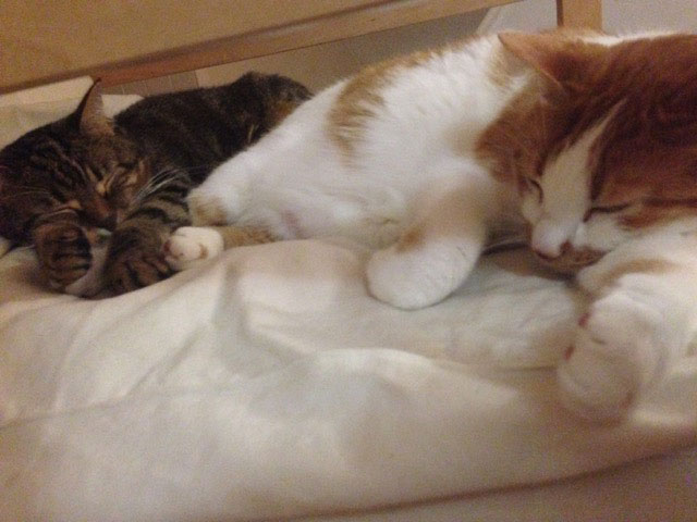 """Emilie sent us a photo of Merlin and Gaya in their new home, """"practising their favourite hobby"""", as she put it!"""