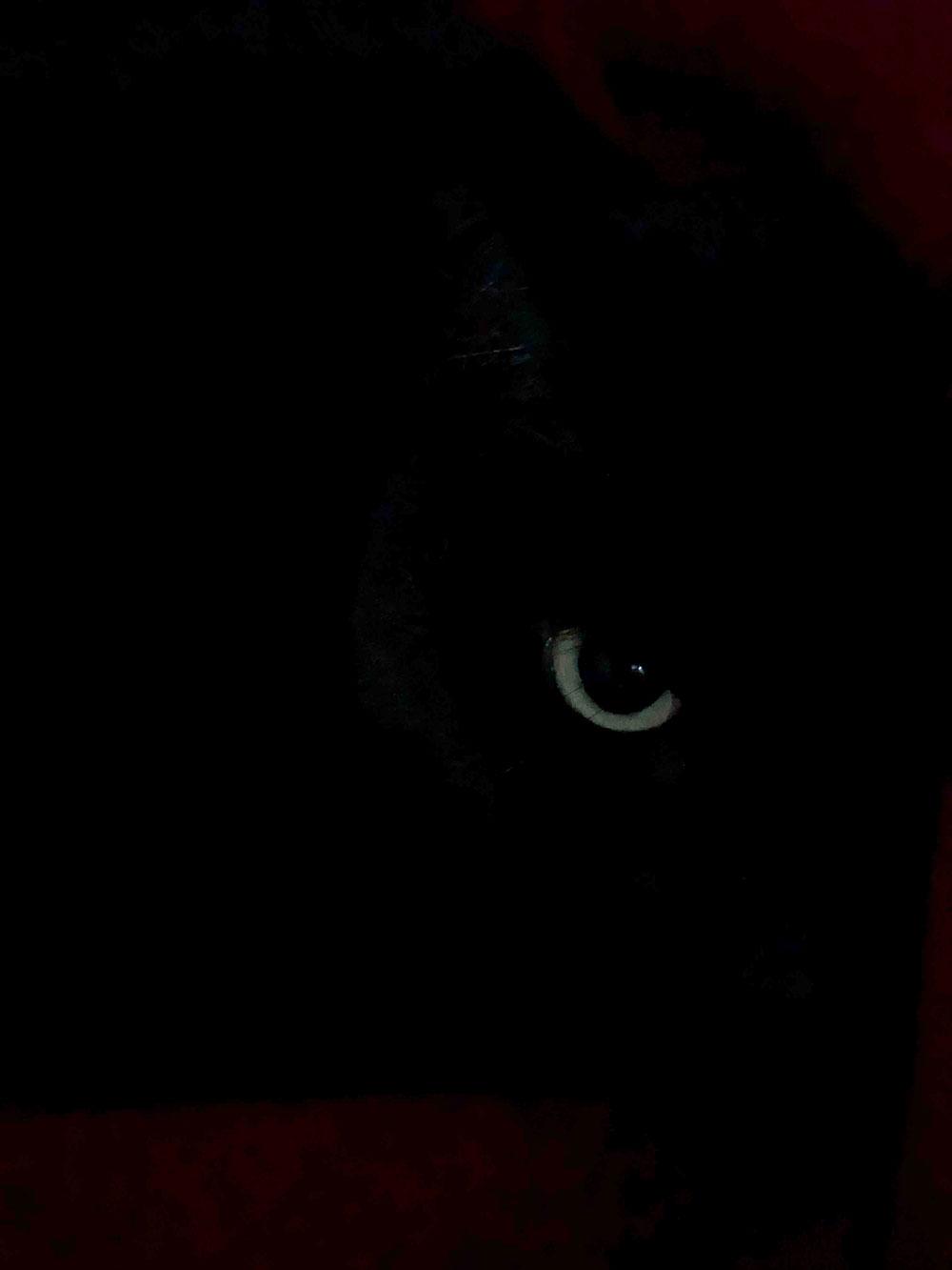 Ada's eye