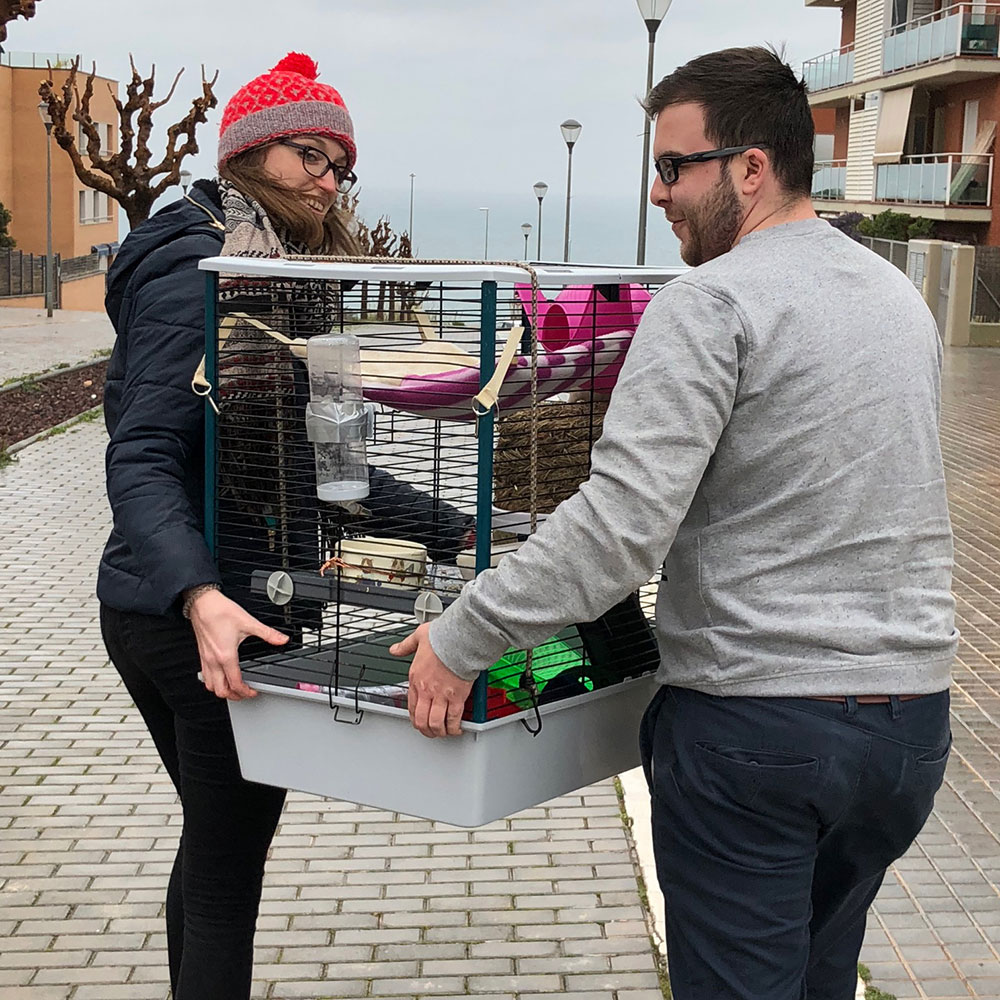 Beatriz taking delivery of the rats with a little help from courier Matthew — who should have put his coat on — it was uncharacteristically cold and wet for Catalonia!