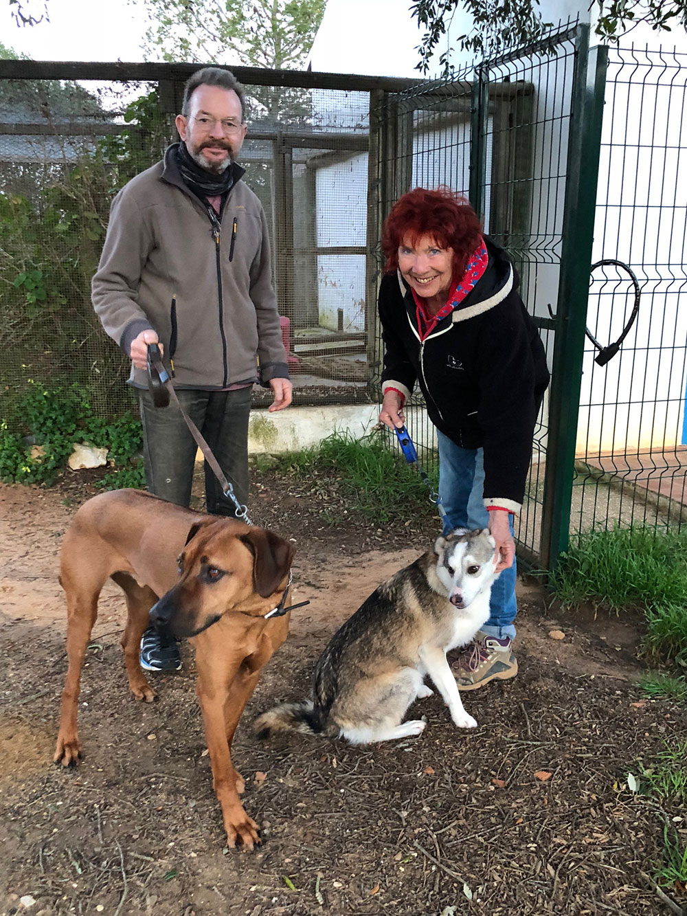 To Portugal: A warm welcome for this delightful pair of hounds from our friends Alan and Heather at Barking Mad Kennels, where they've stayed before. Alan and Heather will deliver them to Yvonne once she arrives.