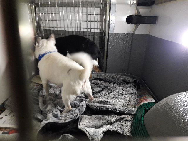 Francis's three dogs are travelling with us from Silves to Lancashire. Here are Masie and Chihuahua Alfie…