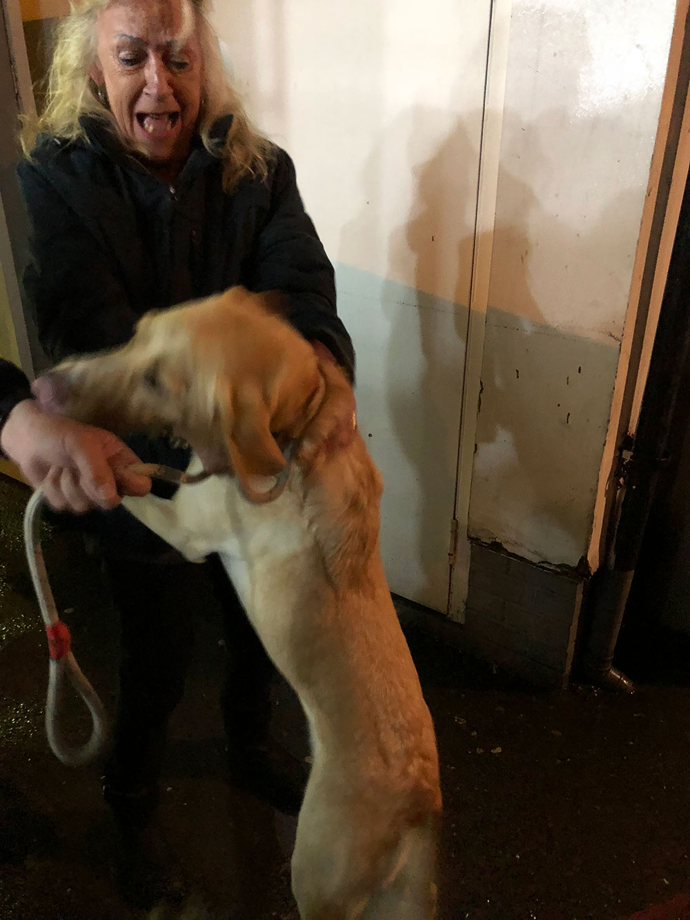 A lively reunion with Zaria as Scooby leaps around