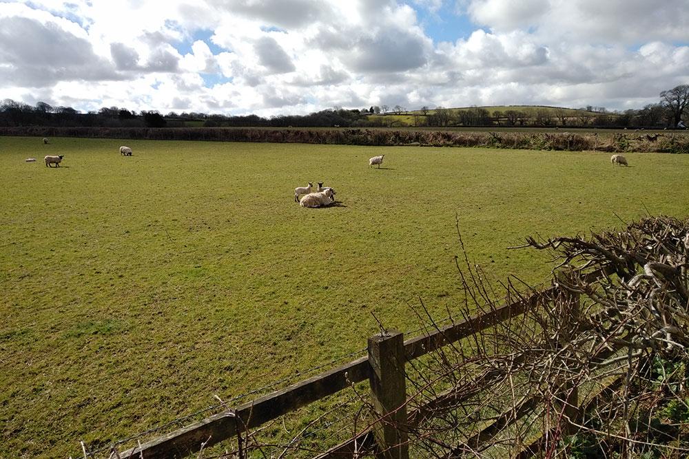 Spring lambs…