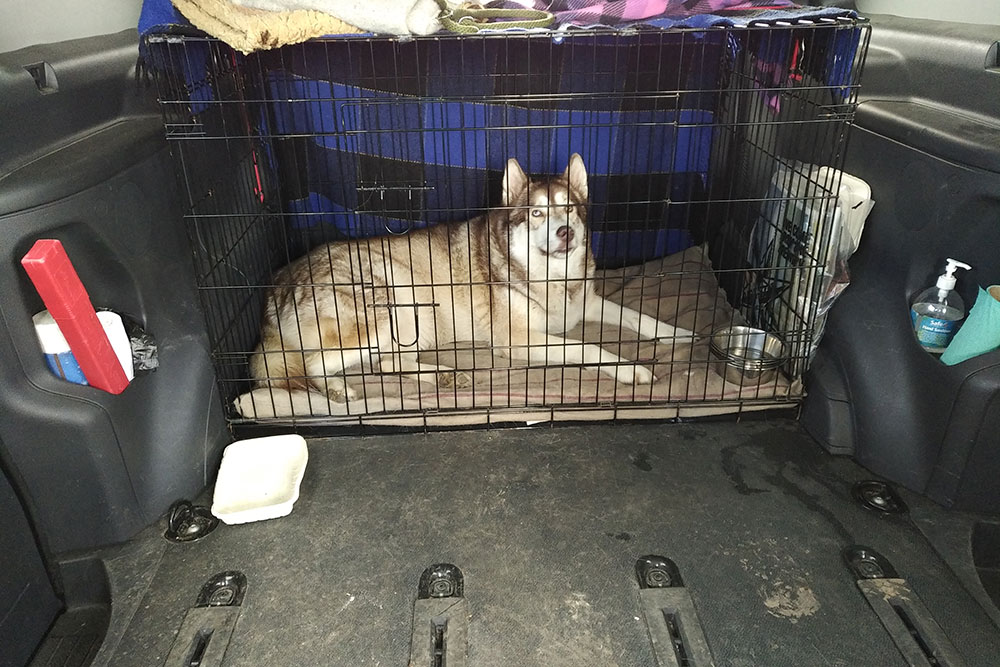 Oskar safely ensconced for the ferry crossing