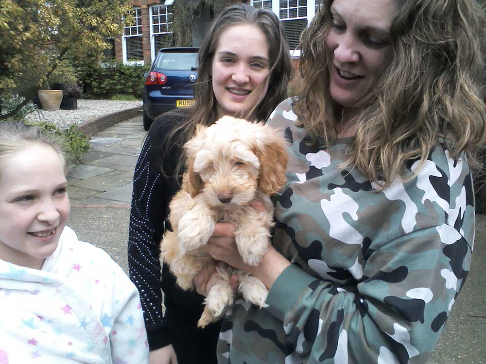 Cute Labradoodle puppy Ede ready to start her new life with Charlotte and family in Bromley