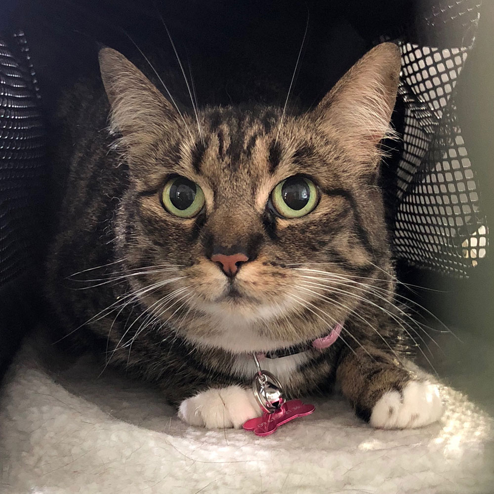 Pets on board: The aptly named Tabby