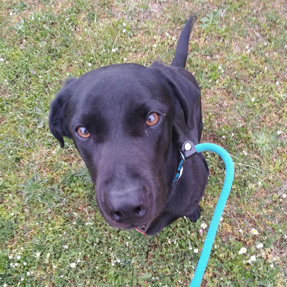 Such a good boy on his walks