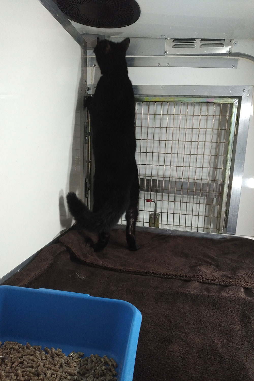 …while Spike attempts to arrange an escape party
