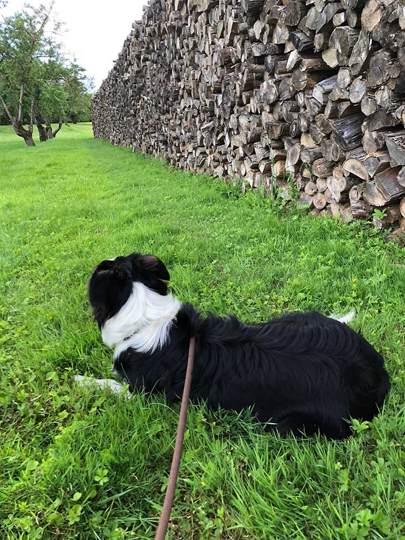 Kieda wondering which log to take with her