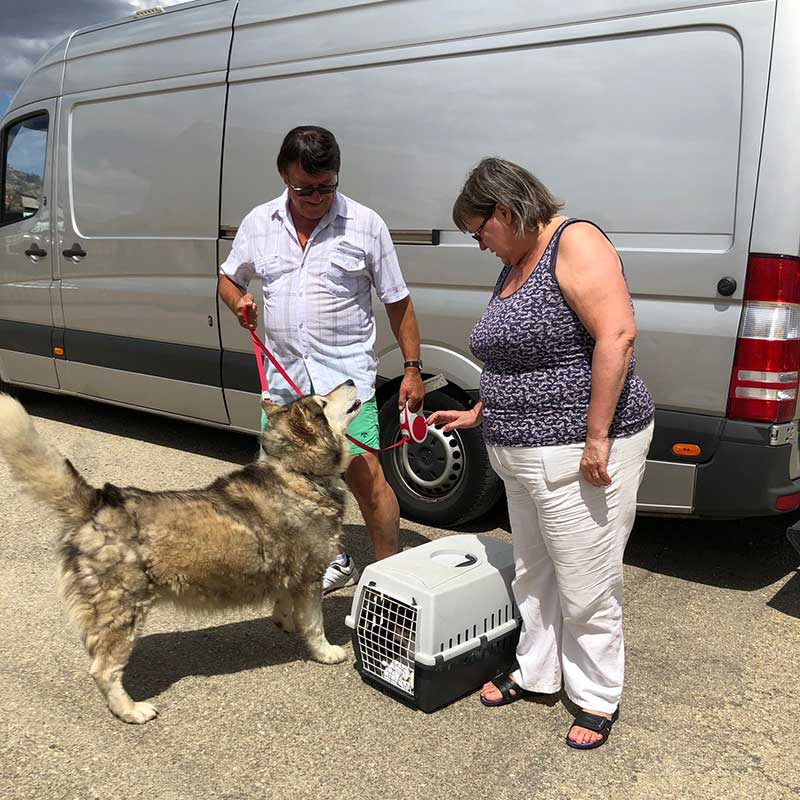 David and Sheila welcoming Duke and Pixie to their new home in the Spanish countryside near Alvin. They're going to get Duke's coat sorted for the warmer weather. We noticed their home has a pool and wondered how long it will be before Duke takes the plunge!