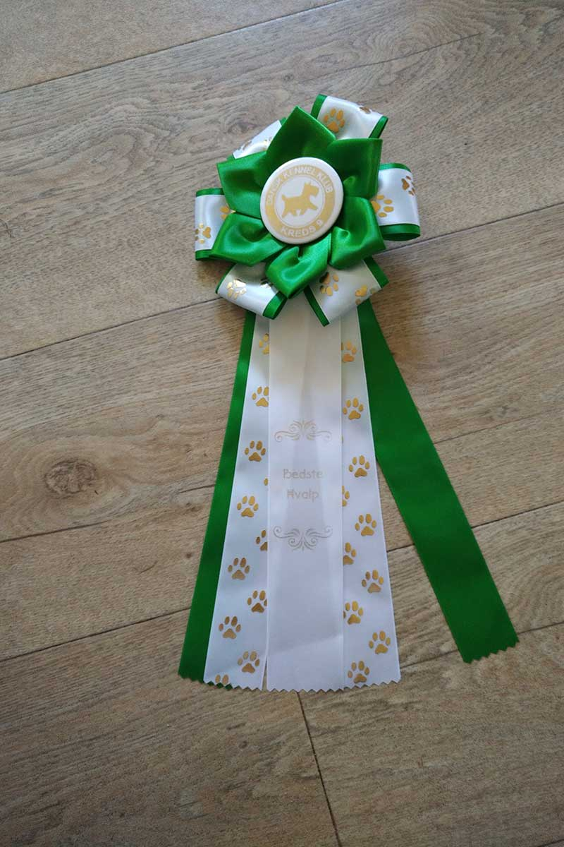Although still a young'un, Ukaleq won a rosette at a recent show