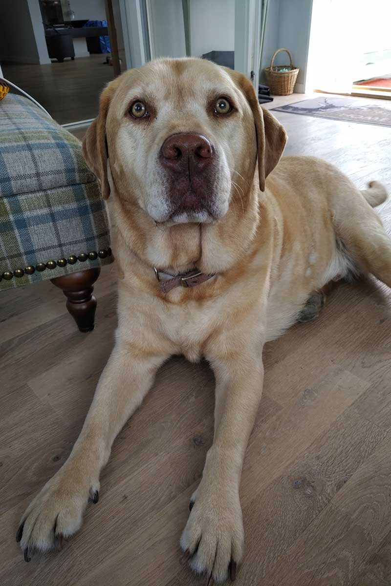 Handsome hound Angus