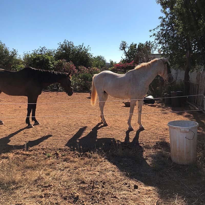 We met resident horses…
