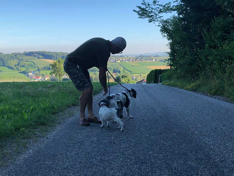 Courier Marc out on an early morning walk near Wels with Sophie and Saffron