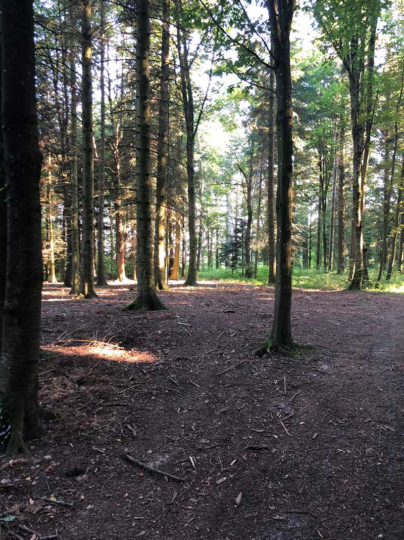 All our canine passengers enjoyed this stunning forest walk
