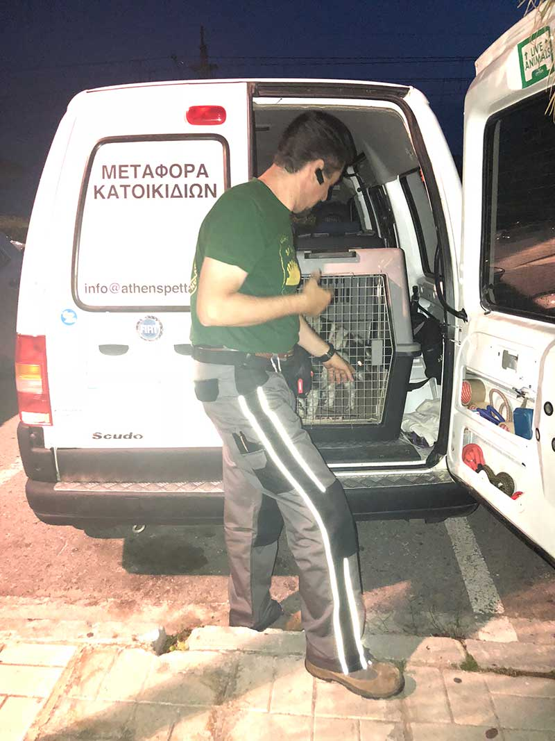 In Athens we caught up with our great friend and colleague Akis, who operates a pet taxi service. He took Saffron, Sophie and Twinkle on the last leg of their trip to rejoin their owners in Rhodes.