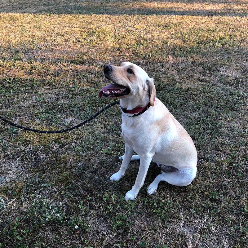 Luna loves her walks, and is very well behaved
