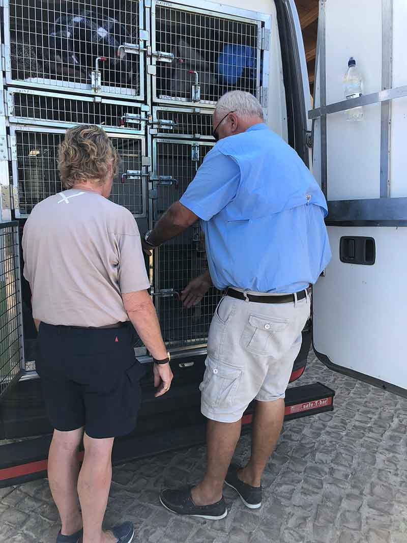 Julie and Simon settling their beloved hounds in for the journey