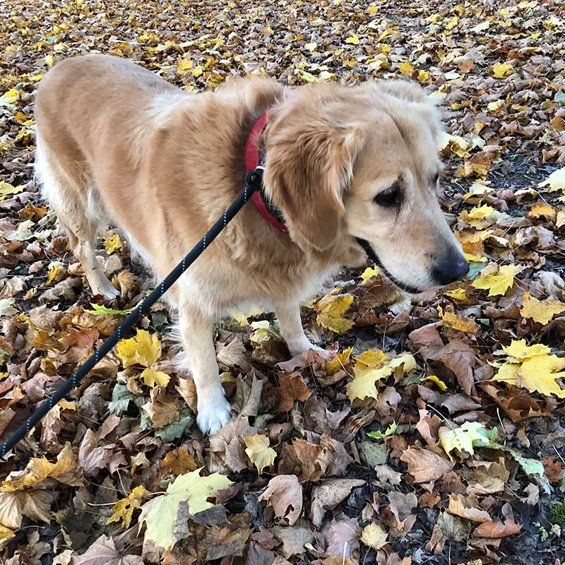 We enjoyed the autumn colours that were just starting to show, and felt that Baloo, from Greece, with his golden coat, made the scene complete