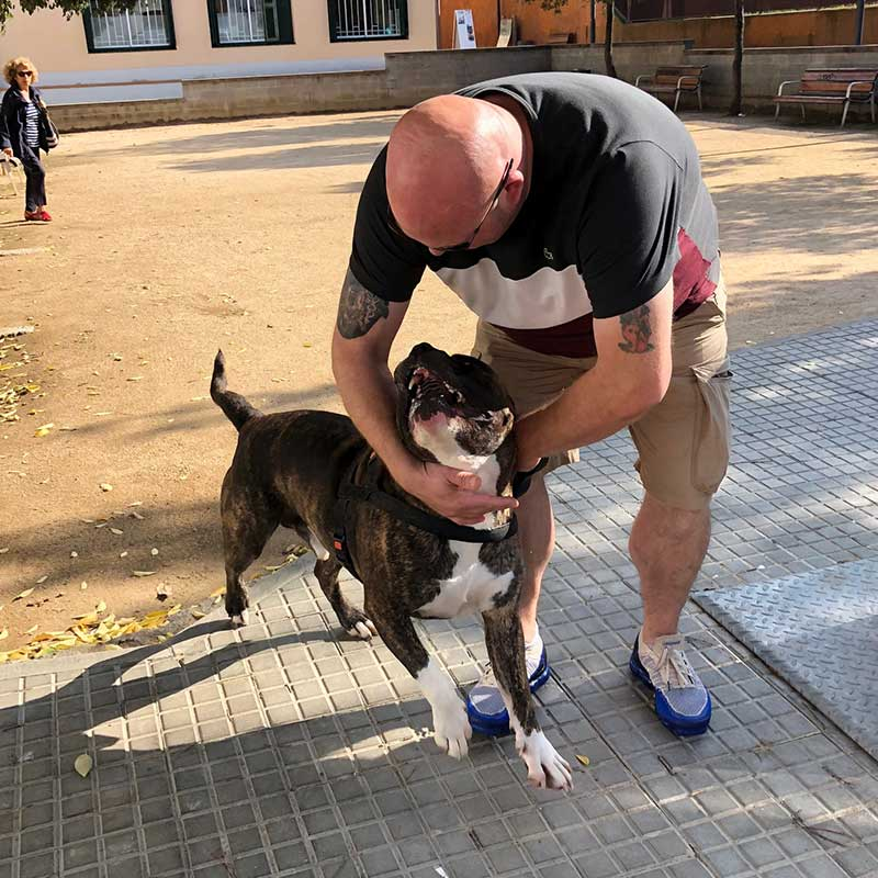 It was hard to say who was more excited when we reunited Alfie with Jonathon in northern Spain