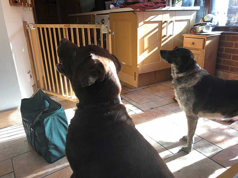 Diesel homeboarded with us for a short while, where he made friends with housedogs Bonnie and Pugsley. Here are Diesel (L) and Bonnie waiting for their supper.