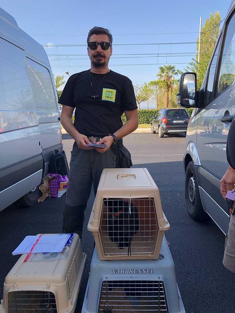 Our dear friend and colleague Akis, who operates a pet taxi service in Athens. We rely on his help every time we come to Greece. When we asked him if he enjoyed working with us, he thought for a moment, then smiled and said, there's something new every day. This time was no exception, as he hared around between the airport, the kennels and the port, with a side trip to Kalamata to collect six pets!