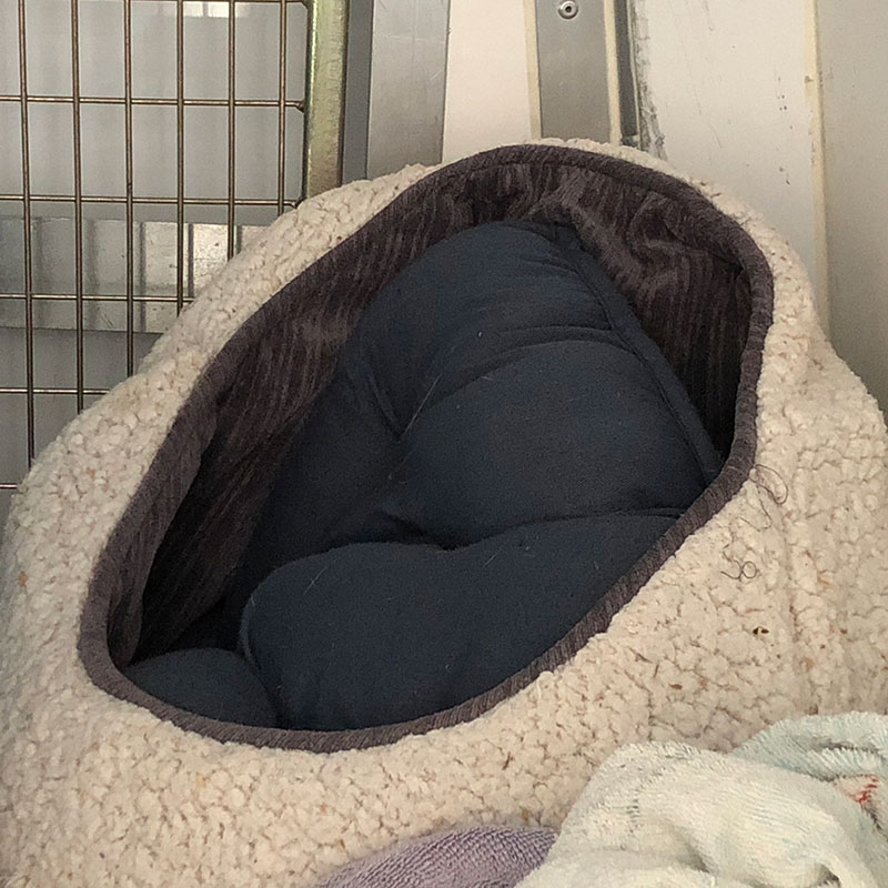 The third member of the trio prefers to snuggle deep inside a cosy igloo bed