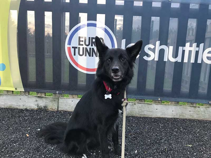 Dana enjoying a walk at Eurotunnel in Calais