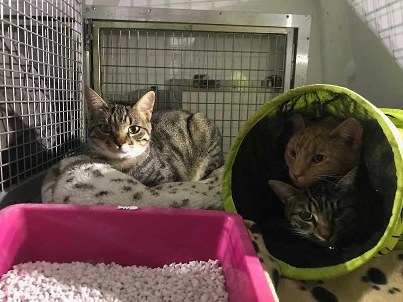 These three great mates are sharing a bedroom. Tommy and Sammy are even sharing the tunnel bed!