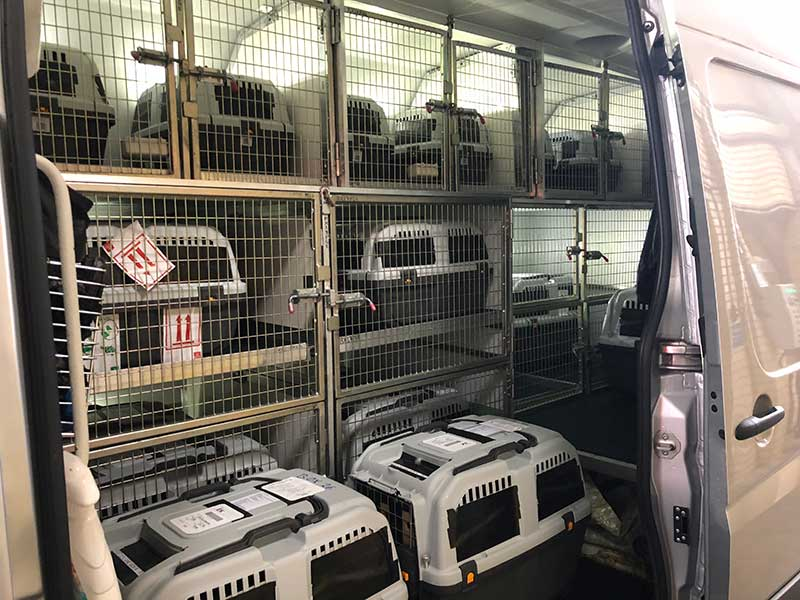 Cast of falcons: The falcons safely transferred to our air-conditioned van