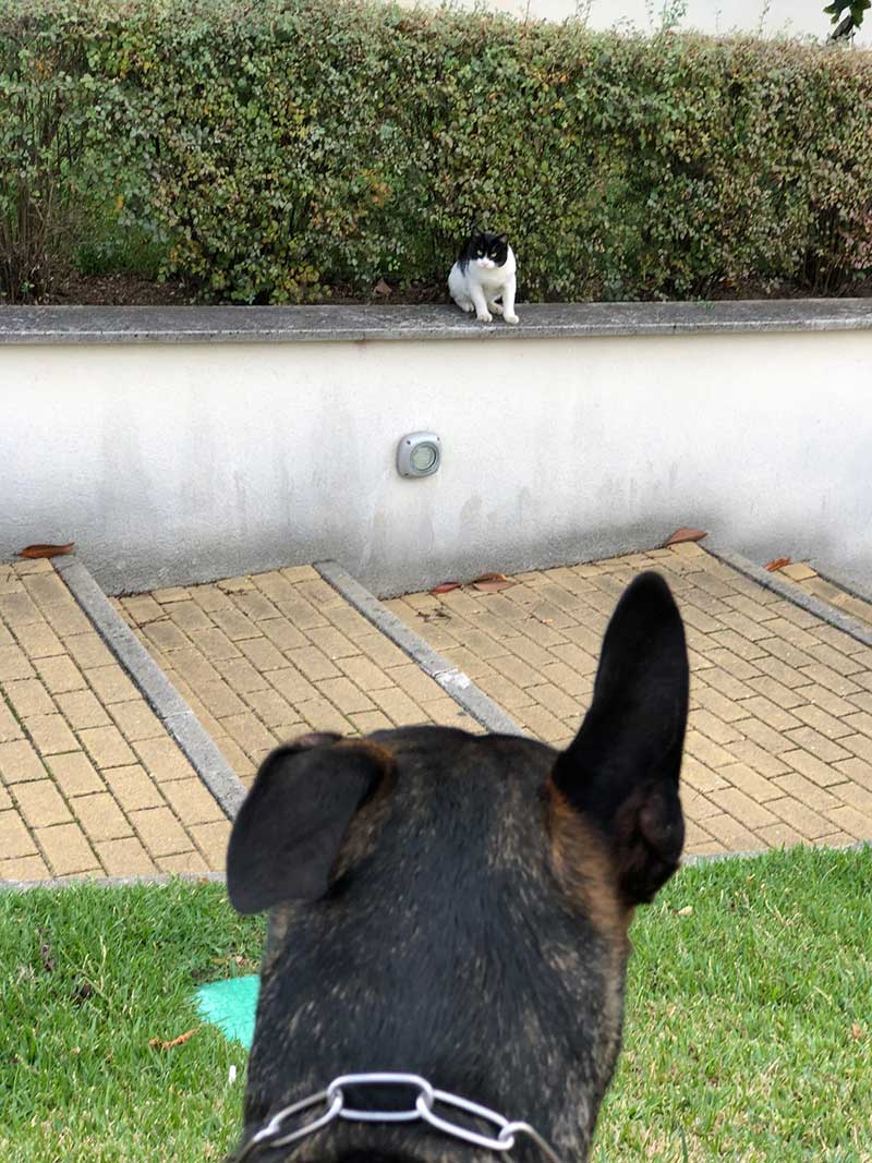 While we were out walking, Teddy and the resident cat at our hotel spotted each other