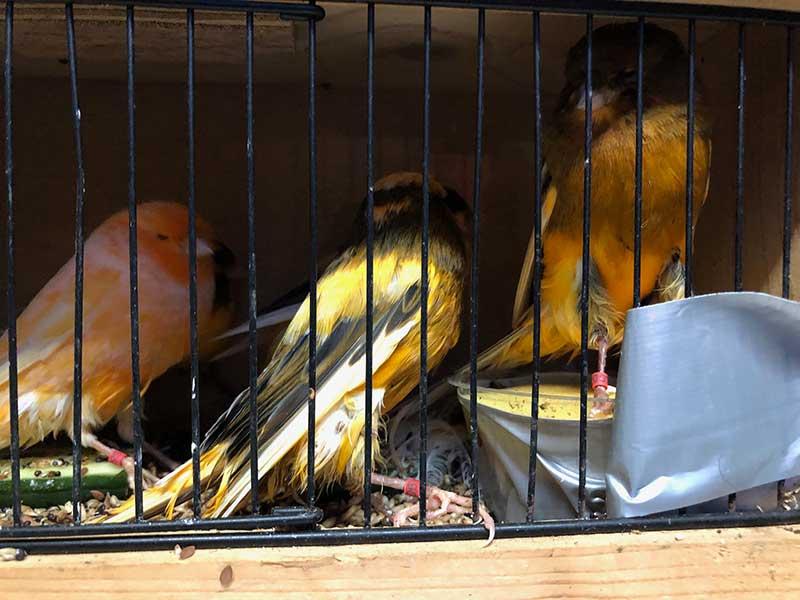 Friendly little birds